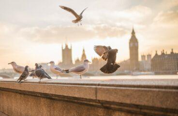 Měli bychom žít jako nebeští ptáci?