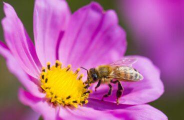 Než přiletí včelička